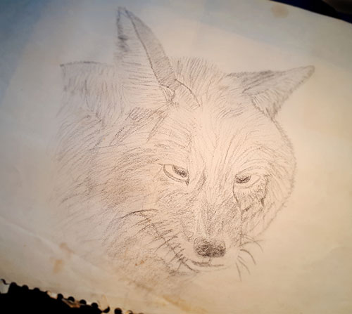 Charcoal drawing of a fox.